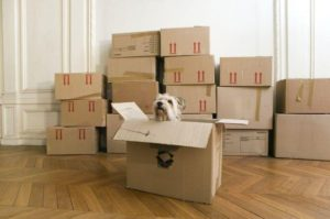 A dog in a box prior to moving