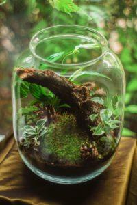 Plants in a glass jar