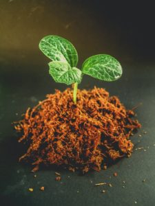 Keep the root ball intact and with as much soil as possible