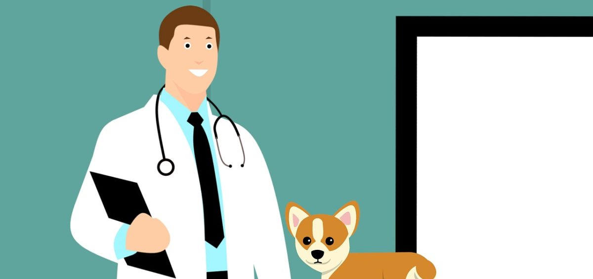 A drawing of a vet with a dog at the vet clinic.