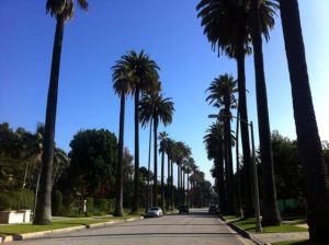 A BH street surrounded with palm trees