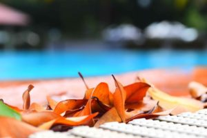 Leaves by the pool.