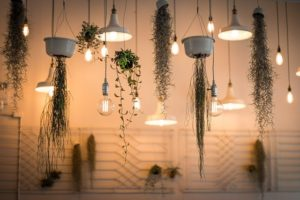 Combination of plants and bulbs hanging from the ceiling.