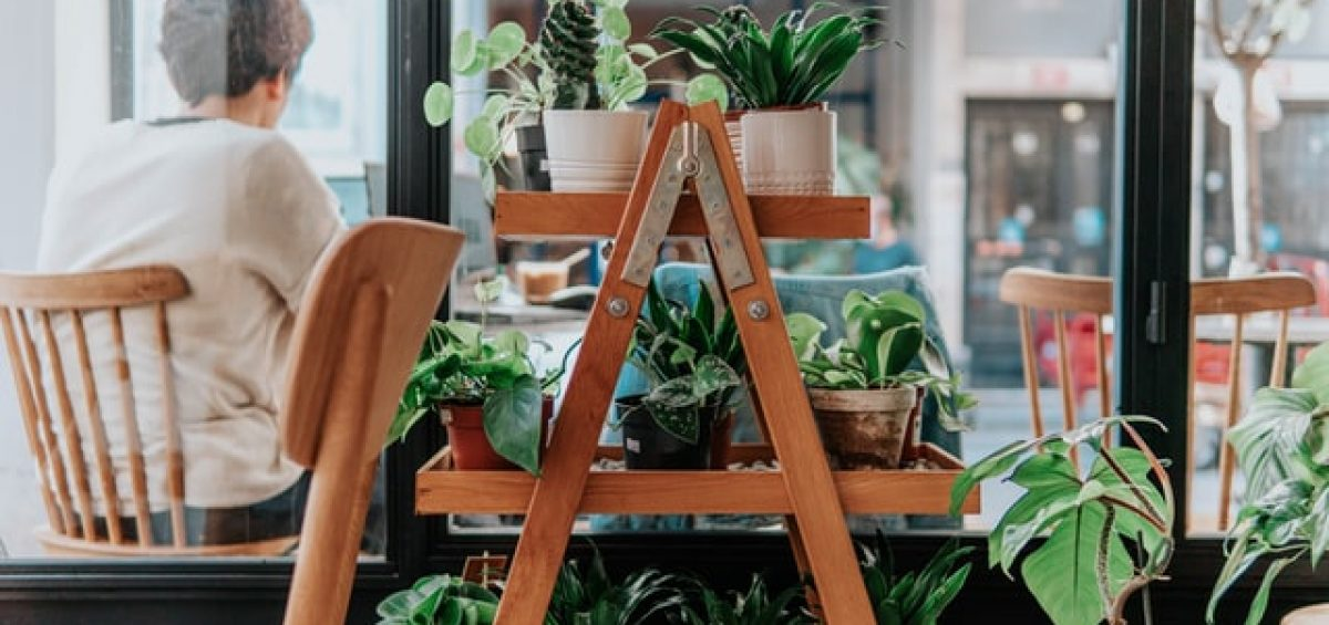 plants on a ladder shelf
