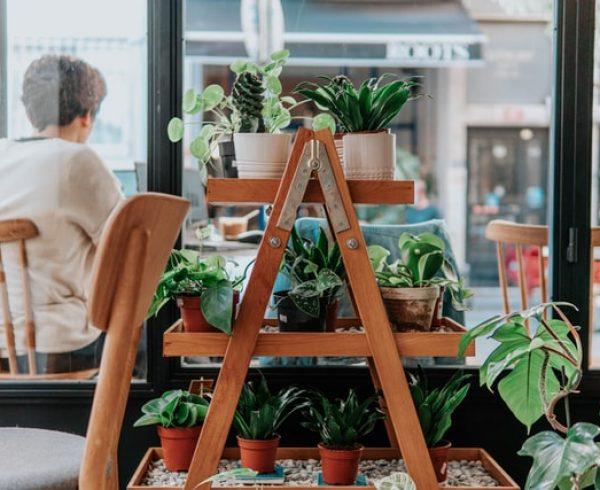 plants on a ladder shelf