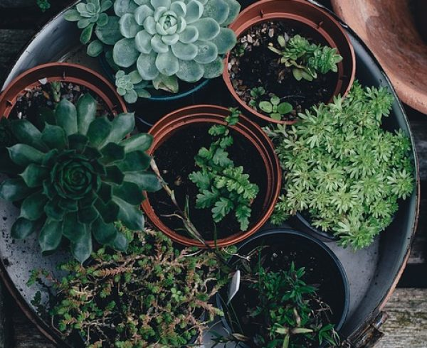 Plants Pot - Relocating in LA