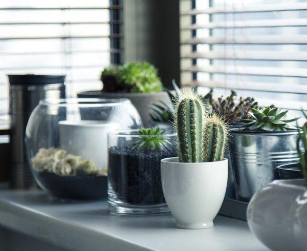 plants in pots by the window
